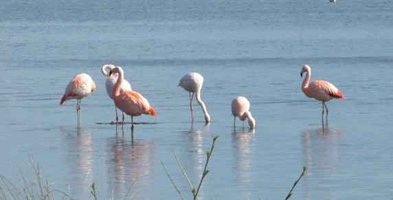 Ganz in der Nähe befindet sich das nördlichste Flamingoparadies